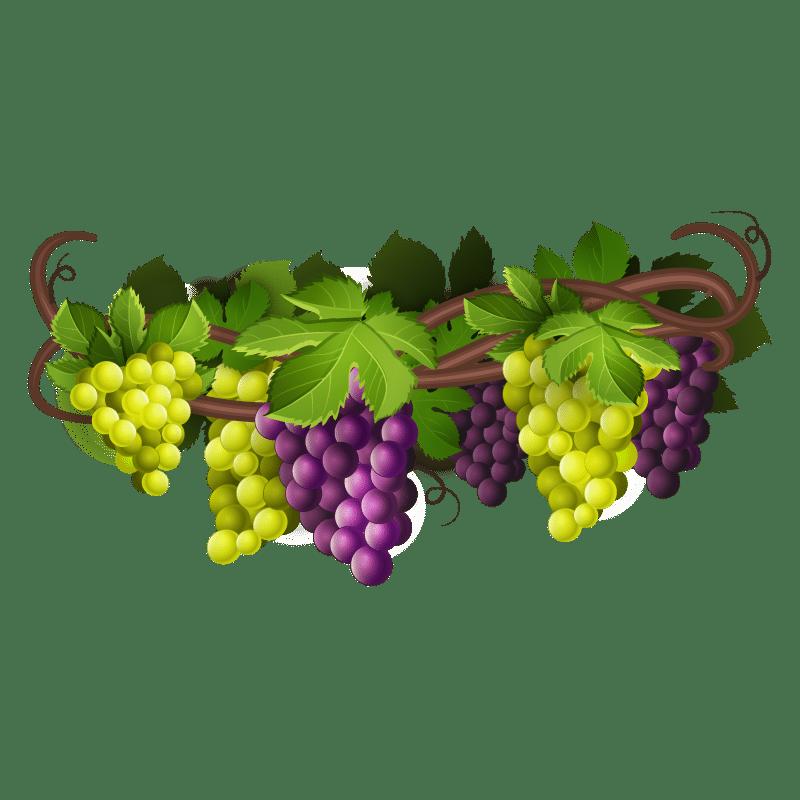 uvas en una viña