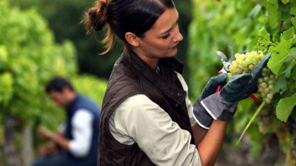 mujer en una viña