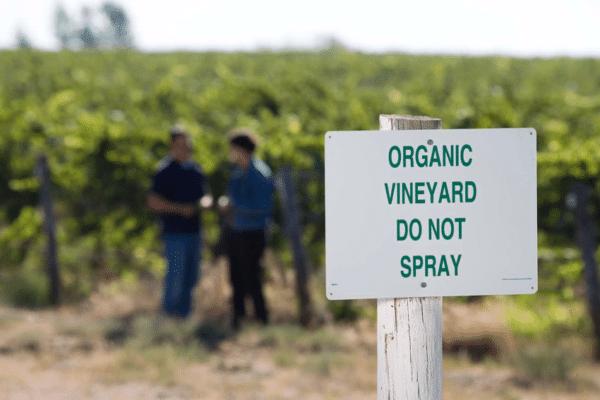viñas de producción orgánica