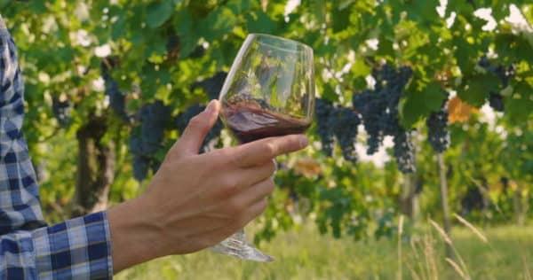 copas de vino sobre unas viñas